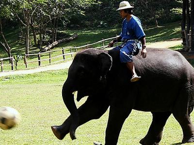 Mae Sa Elephant Camp, Mae Rim