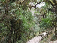 Trail Nayapul to Ghorepani