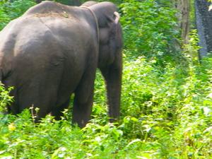 Wildlife & Tea Tasting Trail To Nilgiris Photos