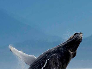 Whale Watching Expeditions