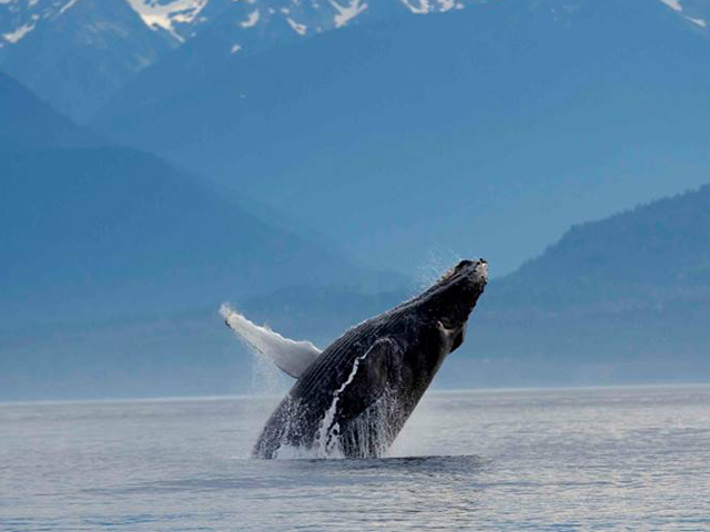 Whale Watching Expeditions Photos