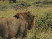 Maasai Mara Explorer