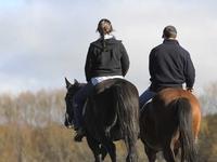 Horse Trekking Down The Upukerora River