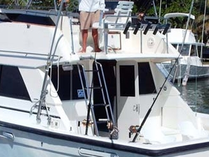 Deap Sea Fishing 33' or 34'ft Charter 8 hrs. Photos