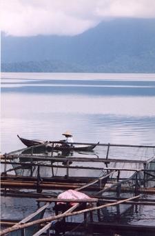 Fisherman On Lake Maninjau