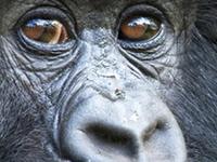 Go Gorilla Trekking