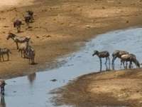Ernest Magic Tours & Safaris, Tarangire