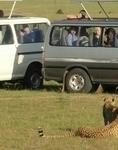 Maasai Mara Wildebeast Migration
