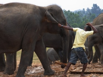 Pulling An Elephant