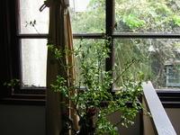 Wistaria Tea House
