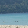 The Beach And The Bay At Kata Noi