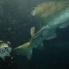 Shark Dive Xtreme In The Shark Harbour Exhibit
