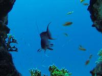 Diving Forever Hurghada