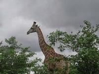 Cheno Travel & Safari Tours