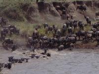 Africa Vast Wildlife 5