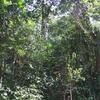 Pugu Hills Forest Reserve