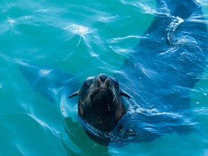 Experience of Snorkel with Seals Tour