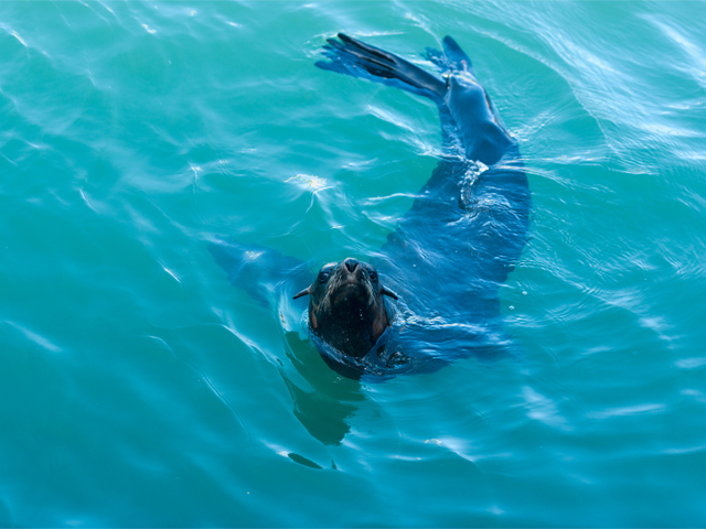 Experience of Snorkel with Seals Tour Photos