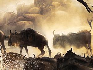 Maasai Mara Safari Fotos