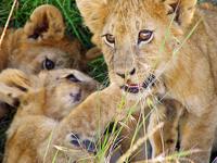 6 Days - Maasai Mara, Lake Nakuru & Samburu
