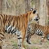 Achanakmar Wildlife Sanctuary