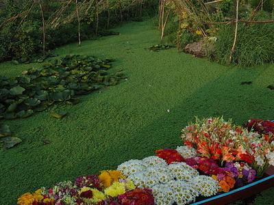 A Florists Shikara Boat