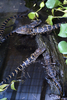 Alligator Babies At Gatorland