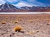 Altiplano Lagoon Miscanti - Atacama