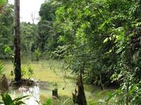Jungle Adventure Tour