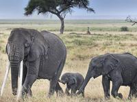 SKSN : 006 Days Amboseli Nakuru Masai Mara Wildlife Camping Tour