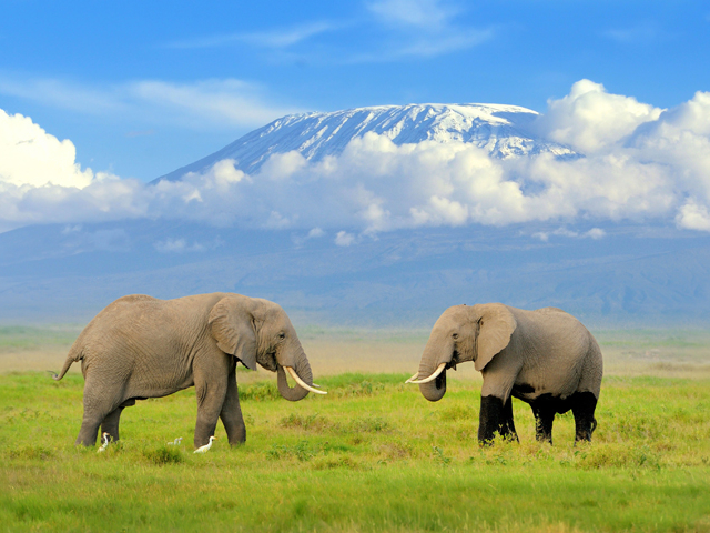 Fascinating Safari Photos