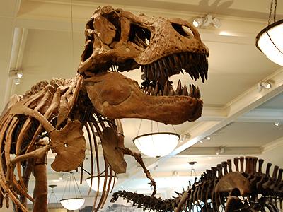 Hall Of Saurischian Dinosaurs