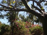 Andromeda Gardens