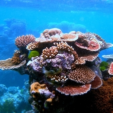 A Variety Of Colourful Corals On Flynn Reef