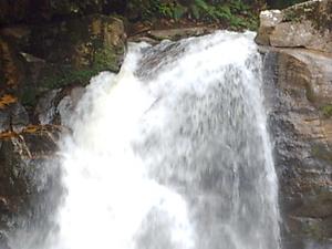 Sinharaja Reserva Forestal