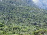 Newlands Forest