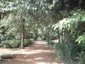 Walking Trail In Bagh E Jinnah