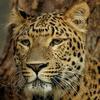 Badrama - Usakothi Wildlife Sanctuary - 1