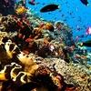 Bali - Komodo - Bunaken - Indonesia