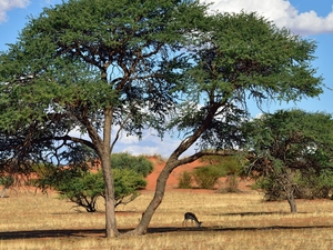 11 Day Kalahari Safari Photos