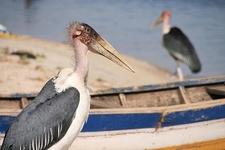 Birds @ Lake Victoria - Tanzania