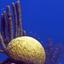 Barrier Reef Reserve