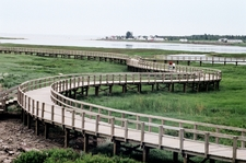 Boardwalk Across The Dunes In The Irving Eco Centre