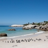 Boulders Beach SA With African Penguins