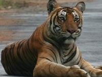 Brahmagiri Wildlife Sanctuary