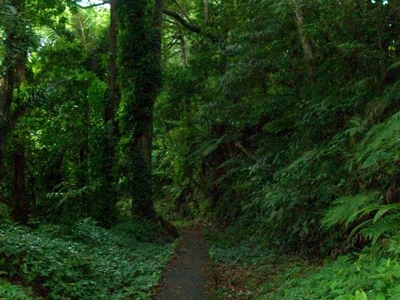 Bulusan Lake Loop Way