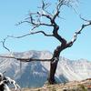 Burmis Tree