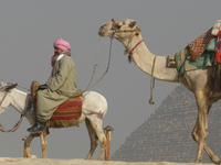 Camels And The Great Pyramid