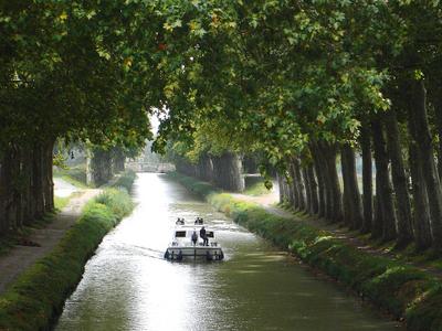 Plane Trees Around Canal Du Midi