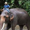 Chiang Dao Elephant Training Center